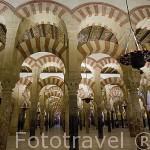 Arcos de la ampliacion de Abderraman II. Interior de la Mezquita Catedral. Ciudad de CORDOBA. Patrimonio de la Humanidad. Andalucia. España
