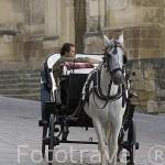 Carruaje turistico junto a la Mezquita Catedral. Ciudad de CORDOBA. Patrimonio de la Humanidad. Andalucia. España
