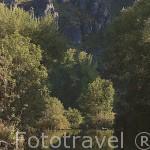 El rio Luna recorre el valle principal de la comarca de BABIA. Leon. Castilla y Leon. España
