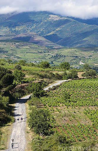 Camino de Santiago entre viñedos cerca de PONFERRADA. Provincia de Leon. Castilla y Leon. España. Spain