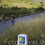 Camino de Santiago cerca de PONFERRADA. Provincia de Leon. España. Spain