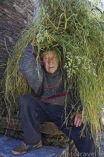 Vecino de PEÑALBA DE SANTIAGO con un monton de hierba. Valle del Silencio.Municipio de Ponferrada. Castilla y Leon. España. Spain