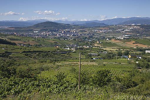 Viñedos cerca de PONFERRADA. Provincia de Leon. Castilla y León. España. Spain