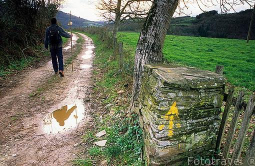 El camino de Santiago cerca de SAMOS. Lugo. Galicia. España