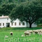 Exterior de la casa rural Riscos Altos. En CAZALLA DE LA SIERRA. Parque Natural de la Sierra Norte. Sevilla. España.