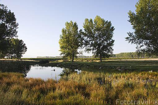Lagunas cerca SAUQUILLO DE CABEZAS. Comarca de Tierra de Pinares. Segovia. Castilla y León. España