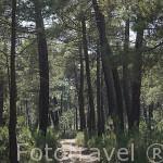 Sendero El Manzano - Sotocivieco cerca de ZARZUELA DEL PINAR. Comarca de Tierra de Pinares. Segovia. Castilla y León. España