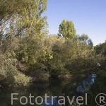 Rio Cega cerca de ZARZUELA DEL PINAR. Comarca de Tierra de Pinares. Segovia. Castilla y León. España
