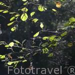 Telas de araña sobre el rio Cega. Comarca de Tierra de Pinares. Segovia. Castilla y León. España