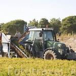 Tractor recogiendo zanahorias. Cerca del pueblo de VALLELADO. Comarca de Tierra de Pinares. Segovia. Castilla y León. España
