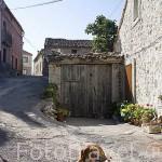 Un perro en el pueblo de CUEVAS DE PROVANCO. Comarca de Tierra de Pinares. Segovia. Castilla y León. España