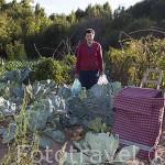 La Sra. Valentina en su huerta recogiendo verduras para la semana. Huerta Los Alamos. Pueblo de CABALLAR. Comarca de Tierra de Pinares. Segovia. Castilla y León. España