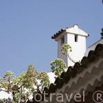 """Plantas llamadas Verodes """"Senecio kleinia"""". Crece en los tejados de los edificios. SAN CRISTOBAL DE LA LAGUNA. Patrimonio UNESCO. Tenerife. Islas Canarias. España"""