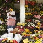 Venta de flores en la plaza de San Francisco o Plaza del Cristo. SAN CRISTOBAL DE LA LAGUNA. Patrimonio UNESCO. Tenerife. Islas Canarias. España