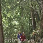 Senderistas en camino hacia la cascada de la Belle au Bois. Cerca de MEGEVE. Valle de Arly. Alta Saboya. Rhones Alpes. Francia