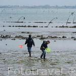 Playas ostricolas de SAINT TROJAN y gente recogiendo mariscos y otros bivalvos. Isla de Oleron. Francia