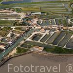 Vista area de las casas y almacenes de los criadores de ostras, junto a los canales irrigables con las mareas cerca de BOYARDVILLE. Isla de Oleron. Francia