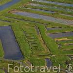 Vista aerea de los canales irrigables con las mareas, utilizados para la cria de las ostras. Cerca de BOYARDVILLE. Isla de Oleron. Francia