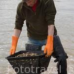 El Sr. Jacques Baron lavando una cesta llena de ostras. Canal de la Seudre. MARENNES. Frente a la isla de Oleron. Francia (MR.072)