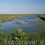 Canales irrigados con agua de mar utilizados para el cultivo de ostras. Cerca de LA BAUDISSIERE. Isla de Oleron. Francia