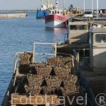 Cestas de plastico repletas de ostras. En el puerto de LE CHATEAU D´OLERON. Isla de Oleron. Francia