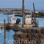 Cestas repletas de ostras en el puerto ostricola de ORS. Isla de Oleron. Francia
