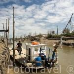 Embarcacion plana especial para el transporte de los cajones de ostras (Ostrea edulis), junto al canal de Seudre. MARENNES. Frente a la isla de Oleron. Francia