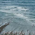 Senderos y playas en el norte de la isla de Oleron, cerca del faro de Chassiron. Francia