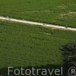 Ciclistas circulando por el norte de la isla de Oleron. Francia