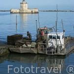 Embarcaciones y gente trabajando con sacos de ostras en BOURCEFRANC LE CHAPUS. Detras el fuerte Louvois y la isla de Oleron. Francia