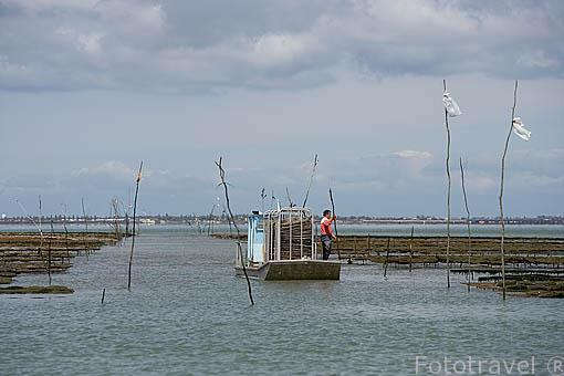 Trabajador y su embarcacion ligera de aluminio en los campos ostricolas en marea baja. Frente a las costas de la isla de Oleron. Francia