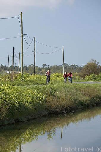 Ciclistas cerca del canal de ORS. Isla de Oleron. Francia