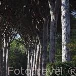 Jardin. Chateau de Saurs. Cerca de Lisle sur Tarn. Tarn. Francia