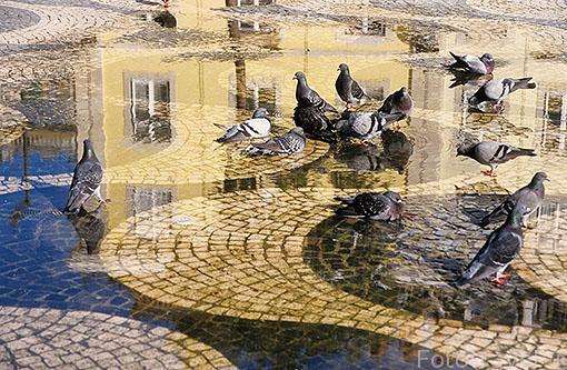 Palomas en la plaza de Pedro IV. Zona del Rossio. LISBOA. Portugal