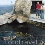 Especies marinas como las nutrias se dan cita en el Oceanario de la ciudad de LISBOA. parque de las Naciones. Portugal
