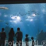 Acuario principal con numerosas especies de animales marinos. El edificio del Oceanario. Parque de las Naciones. Ciudad de LISBOA. Portugal