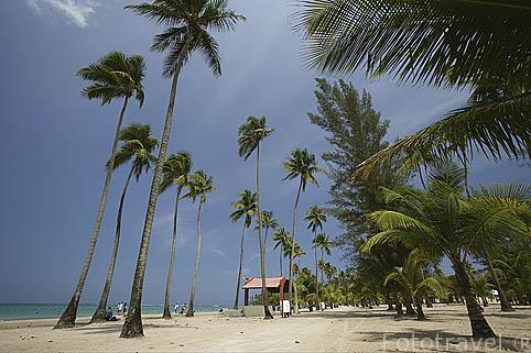 La playa de LUQUILLO y palmeras. Al Noreste de Puerto Rico