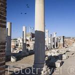 Restos y columnas de la Basilica bizantina, s.VI d.C. Cerca de las ruinas de EFESO / EPHESUS. Egeo. Turquia