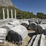 Restos de columnas. Ciudad griega de PRIENE., s.XI a.C. Pertenecia a 1 de las 12 colonias de la Confederación Jonica. parte del imperio Otomano en s.XIV. Mar Egeo. Turquia