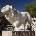 Escultura con forma de leon. Ruinas del templo de Apolo, s. IV d.C. Ruinas de DIDIMA. Costa del mar Egeo. Turquia
