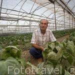 El sr. Nuri Kesku junto a sus invernaderos de más de 1500mts2, donde cultiva principalmente tomates y pepinos. Cerca de DEMRE. Provincia de Antalya. Turquia. M.R.O84