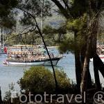 Pinares donde antiguamente estaba el puerto. Ruinas de la ciudad de PHASELIS fundada en el 690 a.C. Provincia de Antalya. Turquia