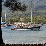 Pinares y barco turistico. Ciudad de PHASELIS fundada en el 690 a.C. Provincia de Antalya. Turquia