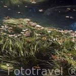 Remanso del rio. Cascadas de Kursunlu a 15 kms. al NE de la ciudad ANTALYA. Turquia