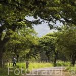 Entrada al Museo de la Caña de Azucar. En Territorio Paraiso. Valle del Cauca. Colombia