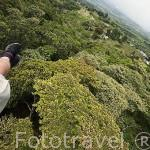 Practicando tirolina en el complejo turistico Territorio Paraiso con vistas sobre el valle del Cauca. COLOMBIA.