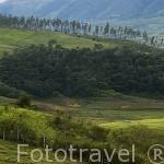 Sierra Occidental, a 75 Kms. de la ciudad de Santiago de CALI. Valle del Cauca. Colombia