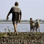Padre e hijo con su ganado vacuno atravesando un curso de agua en la cienaga de Pijiño. MOMPOX. Colombia. Suramerica