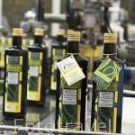 Botellas de aceite de oliva extra virgen, cultivo ecologico. Olivarera Ntra. Sra. de Luna. En VILLANUEVA DE CORDOBA. Comarca de Los Pedroches. Cordoba. España