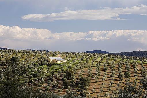 """Una finca y campos de olivos y encinas """"Quercus rotundifolia"""". Cerca del puerto de Calatraveño. Comarca de Los Pedroches. Cordoba. España"""